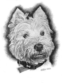 Dog Portrait of a West Highland Terrier Highlands Terrier, West Highland Terrier, Drawing Commissions, Pencil Portrait, Dog Portraits, Dog Pictures, Pencil Drawings, Teddy Bear, Gallery