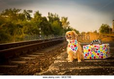 Puppy waiting the train .