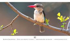 King Fisher Fisher, Wildlife, King, Animals, Animales, Animaux, Animal, Animais