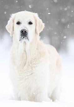 #dog #snow