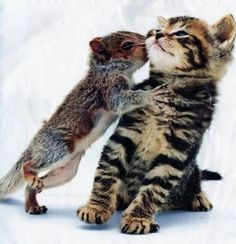 squirrel kissing a kitty.... Let's all collectively say, 'Awwwwwww!' :)