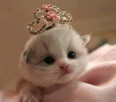 This REALLY CUTE kitten is TOO CUTE to be  TRUE! Description from pinterest.com. I searched for this on bing.com/images