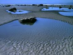 Tidal pools at low tide - Ruby Beach, Olympic National Park, Washington. Be sure to catch the wonderful guided tour and lecture presented by the Rangers. Kelp Forest, Environmental Studies, Oregon Washington, Tide Pools, Heaven On Earth, Day Trips, Places To Go, Coast, Tours