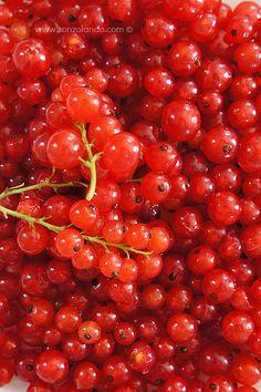 Ribes rossi - Redcurrants | From Zonzolando.com
