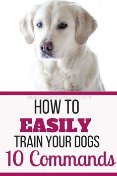 Dog Obedience Training Easy puppy training - 10 useful and easy training commands to teach your dog. Sit, stay, down, out, and go to bed are all useful when training your dog.