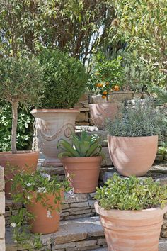 Un jardin luxuriant c'est possible même en pots ! Outdoor Gardens, Garden Landscape Design, Container Gardening, Patio Plants, Garden Pots, Backyard Plants, Plants, Garden Planter Boxes, Home Vegetable Garden