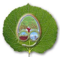 Nederlandse Eetbare Planten en Paddenstoelen Database: lees online over 400 eetbare planten!