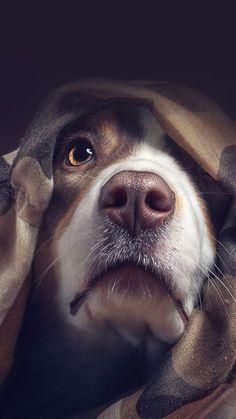 Animals Wallpapers iPhone : Animals wallpaper iPhone