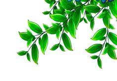 Kawaii Drawings, Plant Leaves, Plants, Plant, Planets