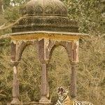 Ranthambhore National Park, India