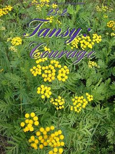 Courage is grace under pressure. — Ernest Hemingway — #FlorasDial #Floriology #Flower #Meaning #Tansy #Courage #FlorasDial0223