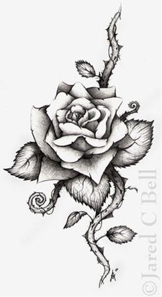 Rose Tattoo: I want this on my shoulder with a red one and thorn . Rose Tattoo: I want this on my shoulder with a red one and thorn . 4 Tattoo, Tattoo Hals, Piercing Tattoo, Tattoo Drawings, Art Drawings, Rose Drawings, Tattoo Outline, Drawing Flowers, Ankle Tattoo