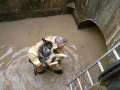 Hurricane Sandy Animal Rescues: 11 Amazing Photos Of Pets Saved From Danger (SLIDESHOW)