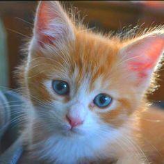 My kitten at 8 weeks <3