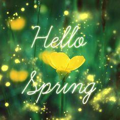 Hello Spring ...yellow flower
