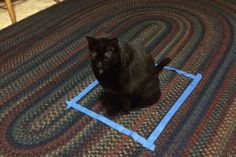 There's nothing the Internet loves more than a good cat fad, and #CatSquare has recently taken over Twitter. Cat owners everywhere are making tape squares on the floor and watching as their feline friends are instinctively drawn to their creations. …