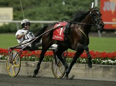 Horse of the Year and setter of two world records, Muscle Hill, winning the 2009 Hambletonian. Standardbred Racing, Horse Racing, Race Horses, Harness Racing, Sport Of Kings, Second World, Horse Breeds, Thoroughbred, Equestrian