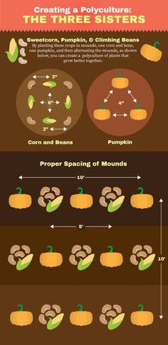 Perennial Plants for Your Garden: Polyculture of Three Sister Plants - Corn, Pumpkin, and Beans