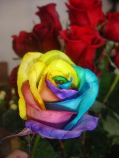 Asi amanecieron nuestras Frescas Rosas Arcoiris. Feliz Viernes amigos ellas te estan esperando ¿te gustan?