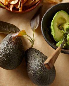 Cold Hardy Avocado - Persea Americana 'Mexicola Grande'