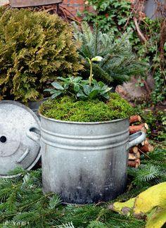 Court No moss going on and the desire for a b - Floral Garden Ideas Moss, Garten, Garden Design, Floral Garden, Plants, Garden Painting, Planter Pots, Living Fence, Zinnias