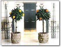 DIY tiny trees for your dollhouse/fairy garden....Polymer Clay Central - Sue Heaser's Ornamental Trees