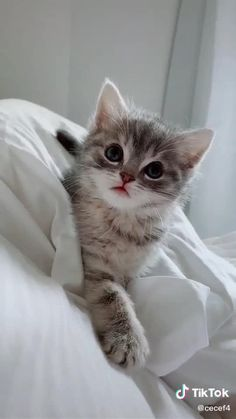 Funny Cute Cats, Cute Baby Cats, Baby Kittens, Cute Cats And Kittens, Cute Funny Animals, Cute Baby Animals, Kittens Cutest, Cute Fluffy Kittens, Cute Dogs