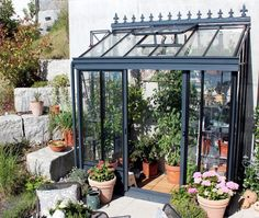 Gardening in a small area: lean-to greenhouses by palm trees - picture . - animals - Gardening in a small area: lean-to greenhouses from palm trees Image 2 -