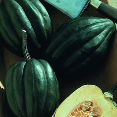Acorn Squash 'Table Ace' -plant Details - Natural Beauty Selects Table Ace' has a delicious nutty, lightly sweet flavor. All Acorn Squash are incredibly easy to prepare. Slice in half and you'll have perfect single-size servings! Stores very well and can last 2-3 months if stored in a cool, dark storage area. To improve the vegetable quality and extend storage time be sure to keep a bit of the stem intact. This vegetable is a good source of dietary fiber and potassium.