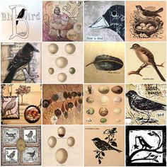 birds for mosaic monday | Flickr - Photo Sharing!
