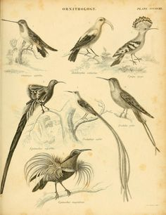 An introduction to the natural history of birds : - Biodiversity Heritage Library