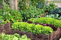 Bepflanzt man sein Hochbeet häufig mit derselben Pflanzenfamilie, können Anbauprobleme auftreten. Hier erfahren Sie, wie Sie das vermeiden können.
