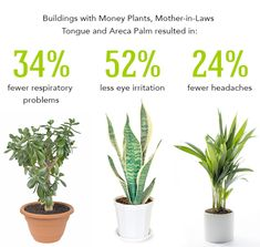Large house plants low light houseplants for low light areas best indoor plants low light good . Indoor Vegetable Gardening, Hydroponic Gardening, Hydroponics, Garden Plants, Organic Gardening, Hydroponic Growing, Texas Gardening, Veg Garden, Inside Plants