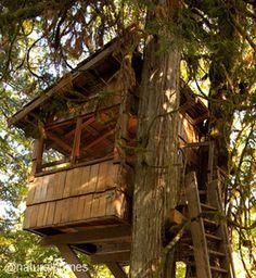 Un pueblo de casas del árbol y conservación de la naturaleza en Issaquah, EE.UU. Más, incluyendo un video, en www.naturalhomes.org/es/homes/treehousepoint.htm