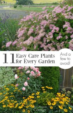 11 tried-and-true easy care plants for every garden- and some to avoid. Use this list to have a garden with year-long interest!