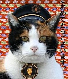 Tama, The Super Station Master Cat!  Tama is the Corporate Executive Officer at Kishi Station in Kinokawa, Wakayama Prefecture, Japan.