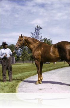 Not too many good color photos of champion Man O' War with his groom and best friend, Will Harbut
