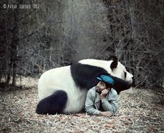 The Winter Companion  by Pavan Krushik. Oh how I would love to have a panda friend!