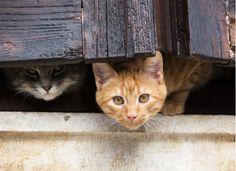 Cat Supplies Dispensador De Agua Y Comida Para Perros Y Gatos Record Dependable Performance