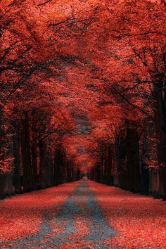Autumn Lane, Kassel, Germany  photo by Ronny Engelmann