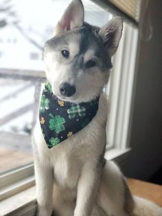Let your dog join in on the St. Patty's Day celebrations with this over the collar bandana! of your purchase is donated to help dogs in need at local animal shelters. Chihuahua Dogs, Pet Dogs, Dogs And Puppies, Pets, Dog Accesories, Accessories, St Paddys Day, Pet Life, Crazy Dog