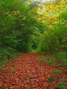 El sendero no se recorre del todo hasta que se comprende que el sendero es uno mismo. En eso consiste todo. El único propósito es andar el camino. No hay nada más allá, solo travesía. Sin atajos, sin restas. Un pie tras otro, un día tras otro. Ahora toca transitar por el otoño. Porque ahora, amigo, ahora es otoño en los senderos. Y yo… yo soy senda en otoño, y aun busco evasivas entre las hojas derramadas.  Juan Goñi