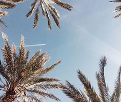 Palm Trees soon.