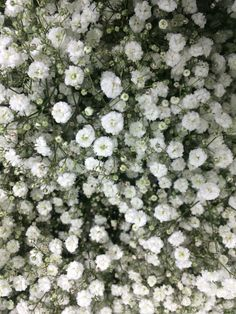 A very popular flower for weddings is Gyp Beauty bride! Perfect for arrangements, bouquets and table centres!