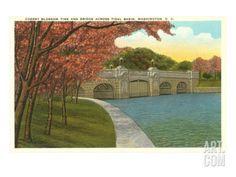 Cherry Blossoms, Tidal Basin, Washington D.C. Art Print at Art.com