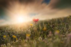 Red Flower by Darawan on did: sky replacement& motion blur 4 clouds ISO 100 Beautiful Day, Beautiful Flowers, Heaven's Gate, Motion Blur, Red Flowers, Dandelion, Clouds, Sky, Fine Art