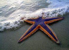 22 starfish/ kcm