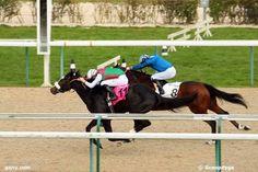 deauville résultat mardi 11 8 4 16 6 - mercredi 21 octobre 2015 plat 2500 mètres 16 chevaux Mardi, Horses, Animals, Wednesday, October, Accessories, Animales, Animaux, Horse