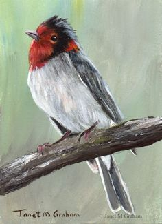 Red Faced Warbler ACEO Bird Wildlife Original Bird ACEO Acrylic Painting