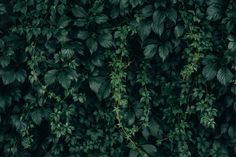 Picture of Moody Green Vine Wall Texture — Free Stock Photo